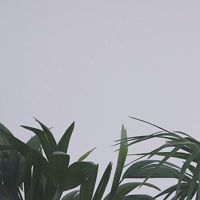 Rosanna-Peng-Project-Cheat-Sheet-Thumb
